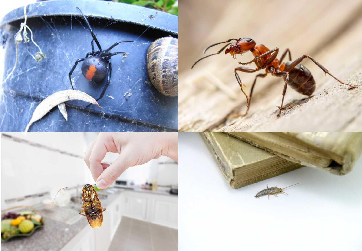 termite cockroach spider